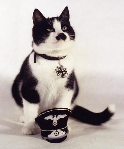 Titler Cat
